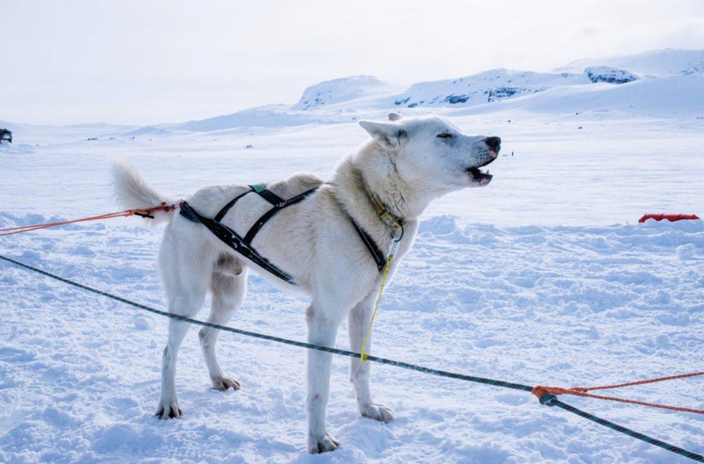 Harjoituksissa apuna olleet koirat saivat Polar medicine -kurssilaisia paljon rapsutuksia.